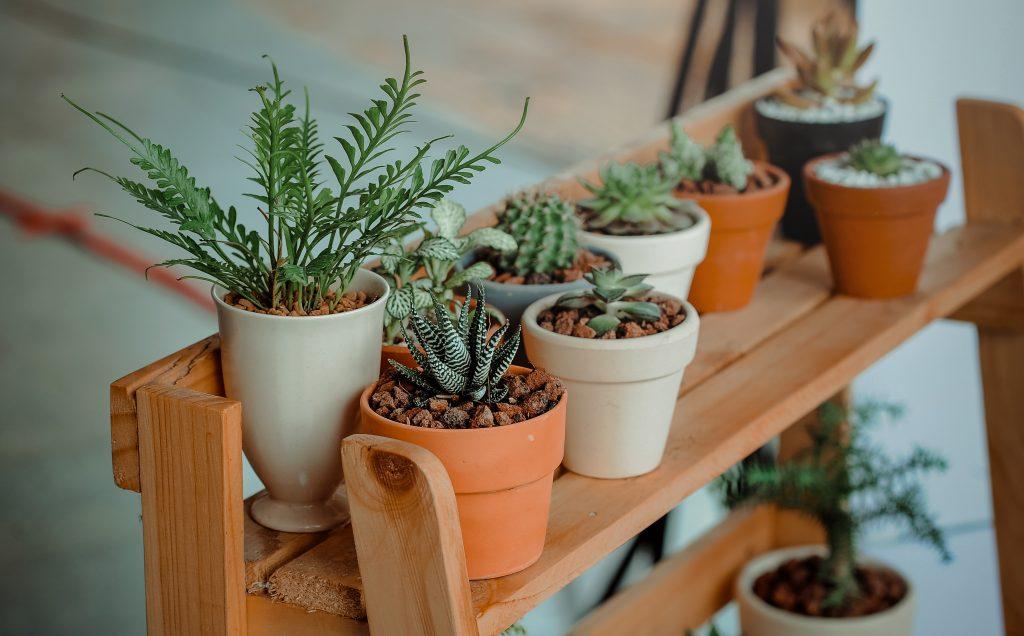 rastlina v loncu