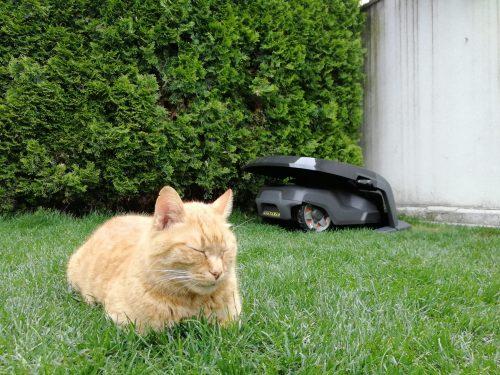 mačka in robotska kosilnica